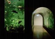 Donau_Aquarium03